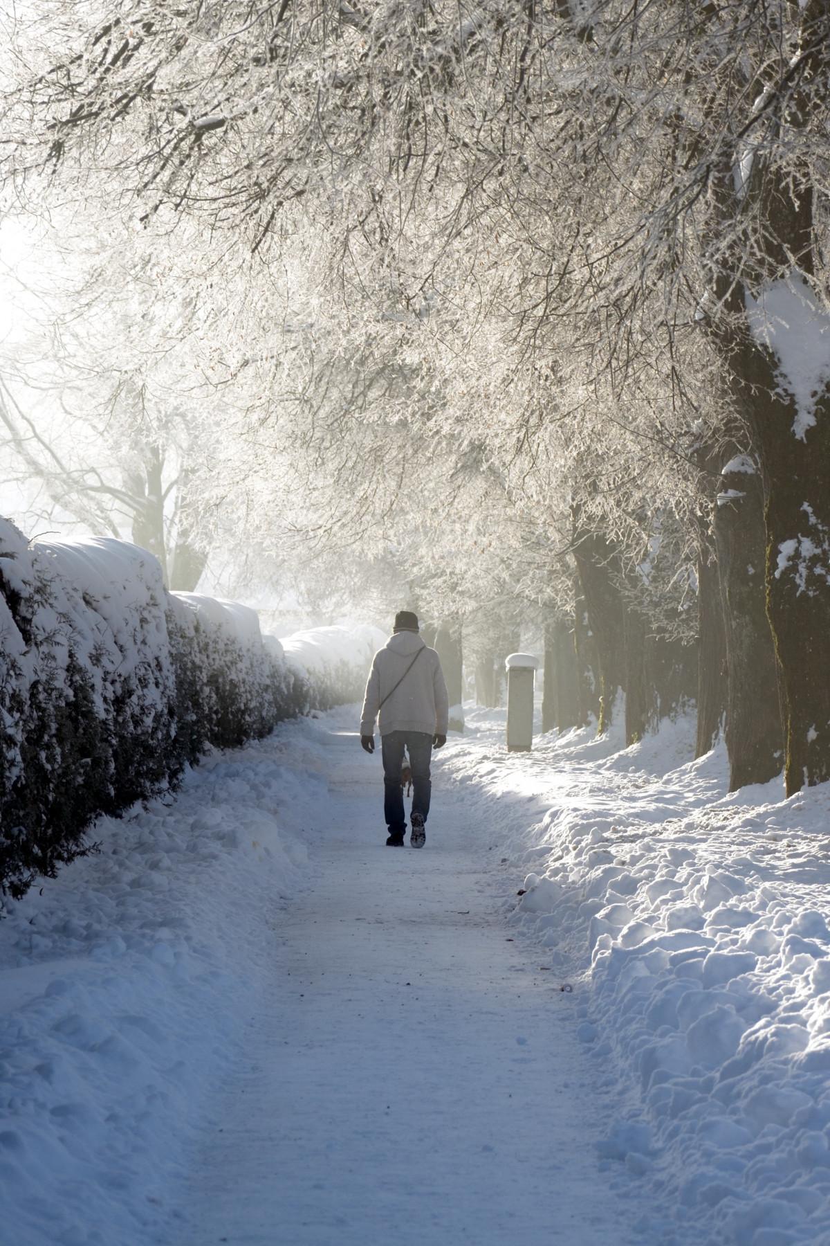 images gratuites paysage arbre la nature for t la personne neige du froid hiver. Black Bedroom Furniture Sets. Home Design Ideas