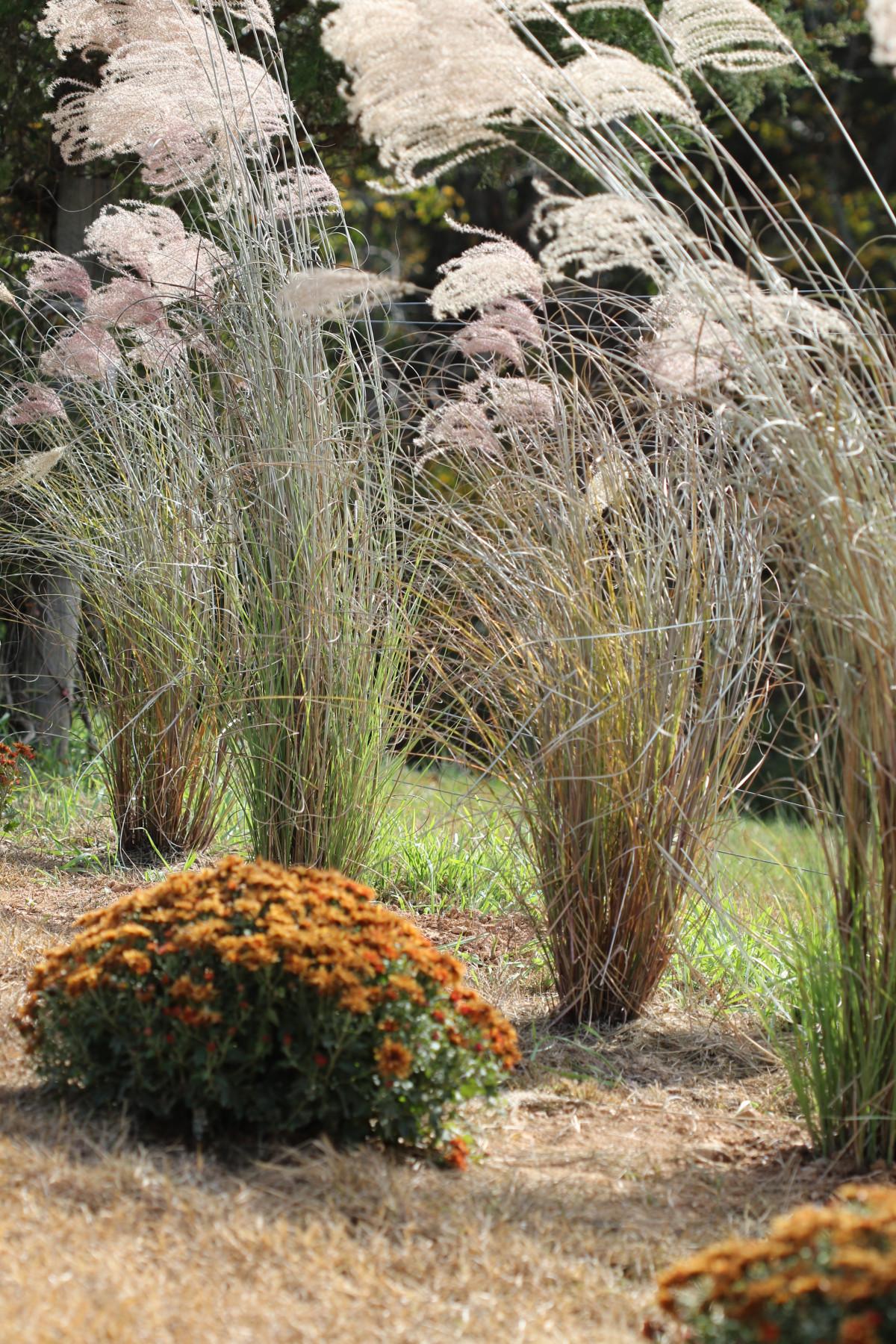 kostenlose foto landschaft baum gras draussen pflanze rasen fallen blume bl hen. Black Bedroom Furniture Sets. Home Design Ideas