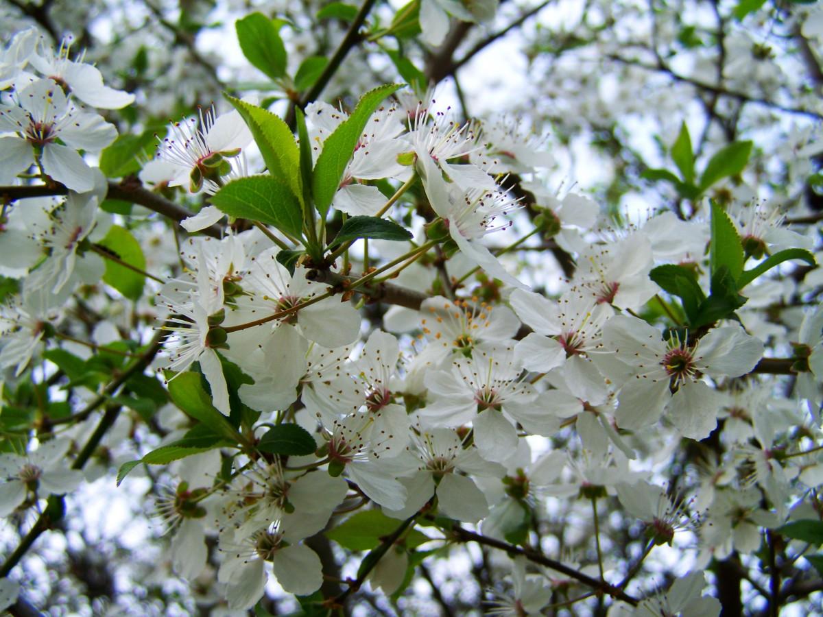Что посадить на 6 сотках: деревья, растения, кустарники и цветы 60