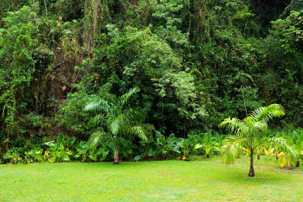 Images gratuites paysage arbre la nature plante for Perspective jardin 78