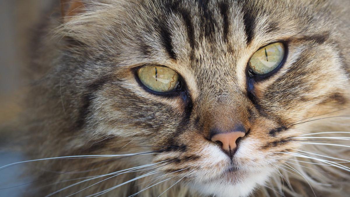 50 Gambar Binatang Yang Keren Gratis Terbaik