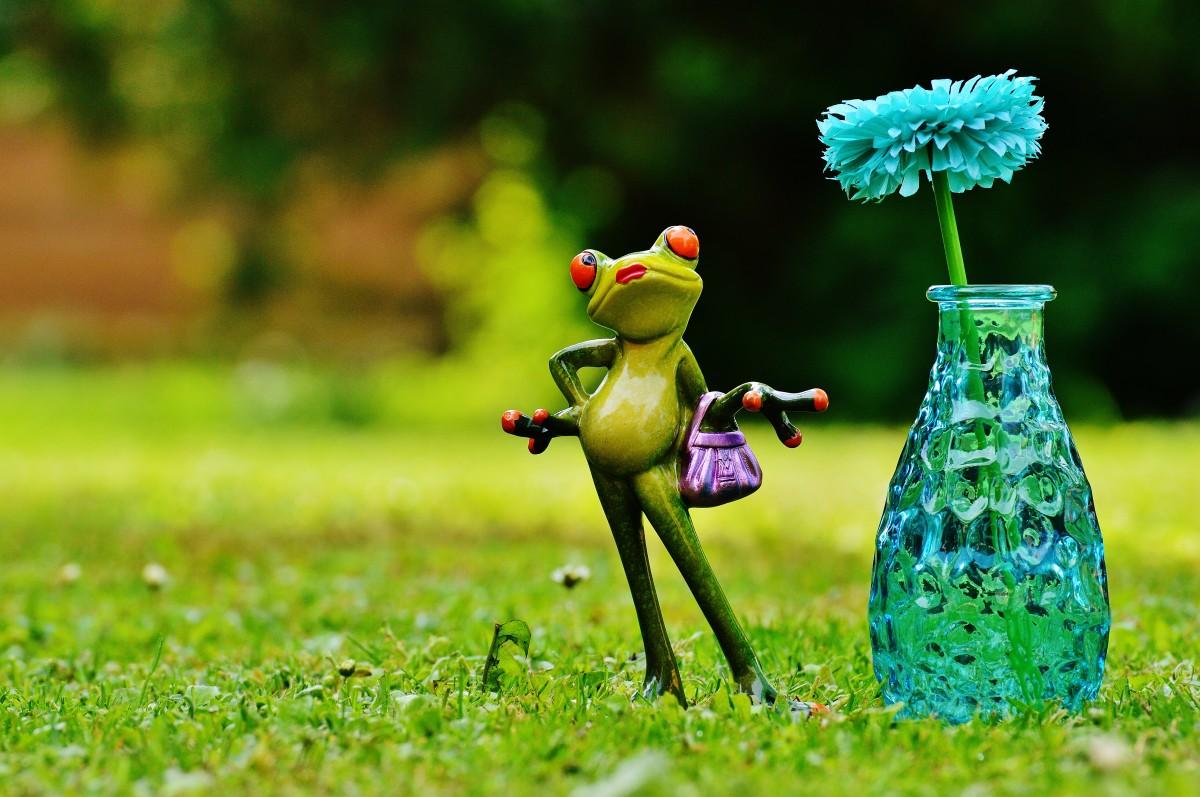 Рада, прикольные картинки растения