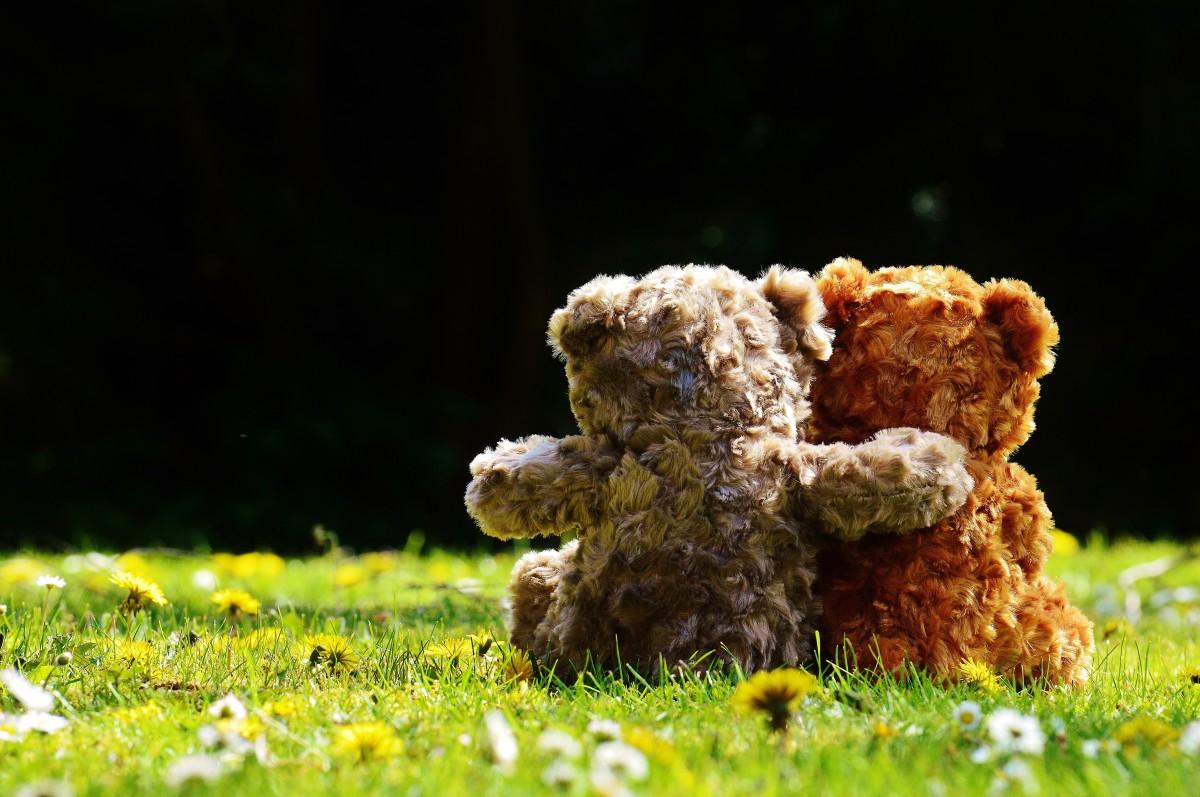 Images gratuites doux feuille mignonne amour l 39 automne romance romantique champignon - Application pour reconnaitre les champignons ...