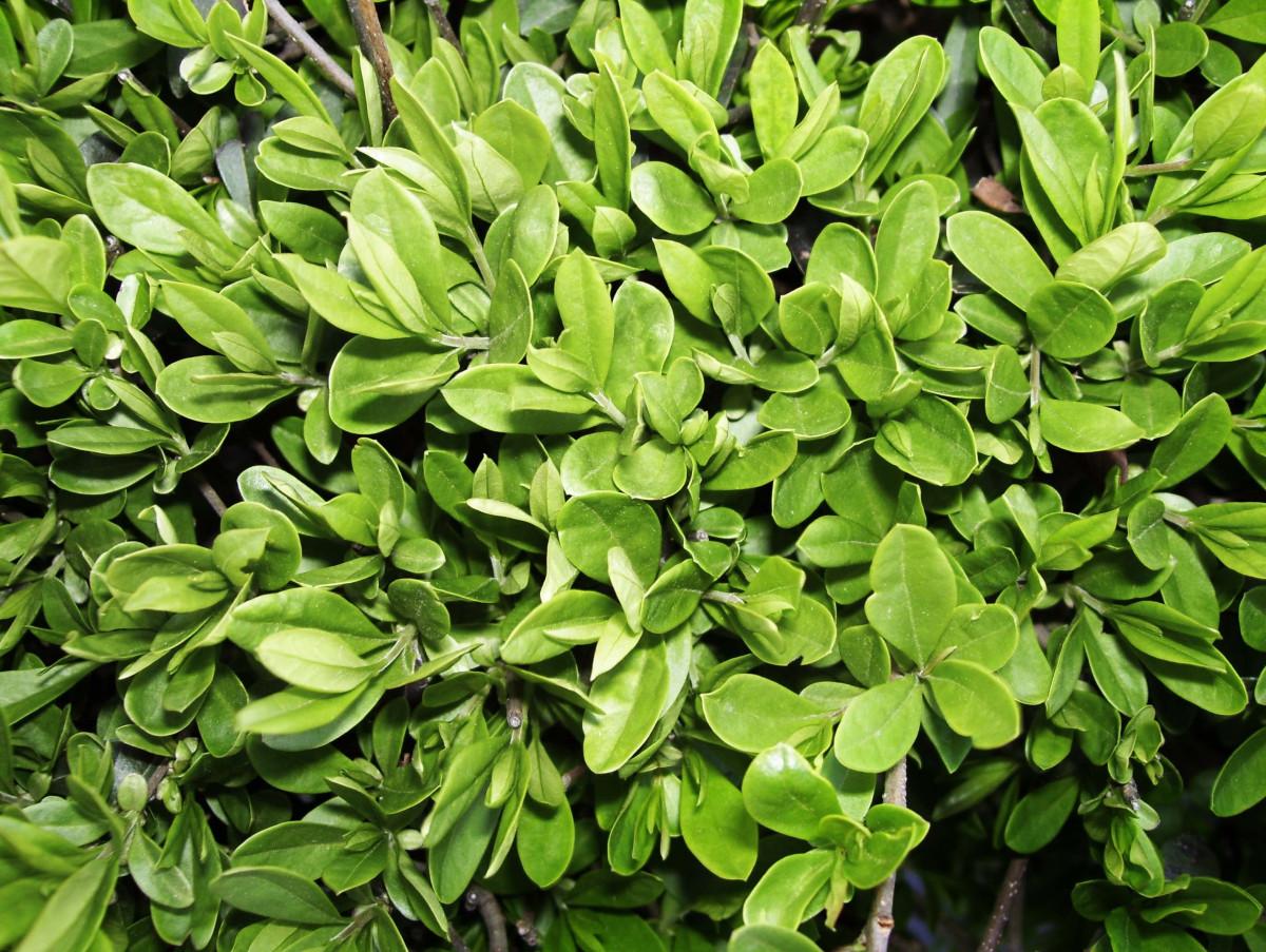 Фото цветы растения листва