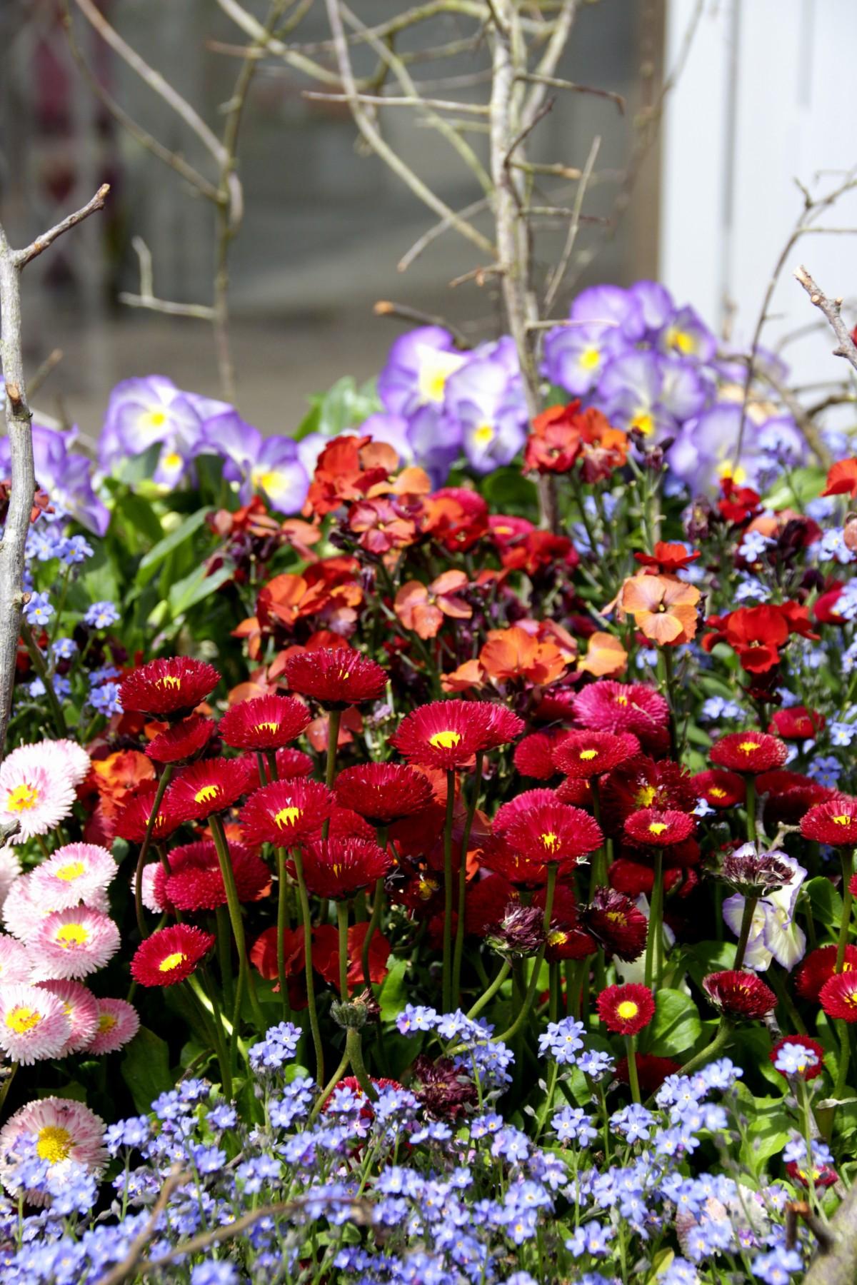 Fotos gratis naturaleza hoja p talo primavera rojo for Arbol rojo jardin