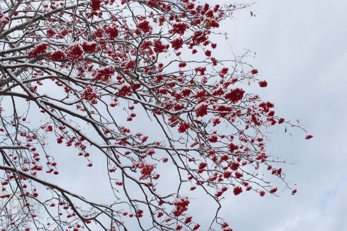 Images gratuites paysage arbre branche neige hiver - Photos de neige gratuites ...