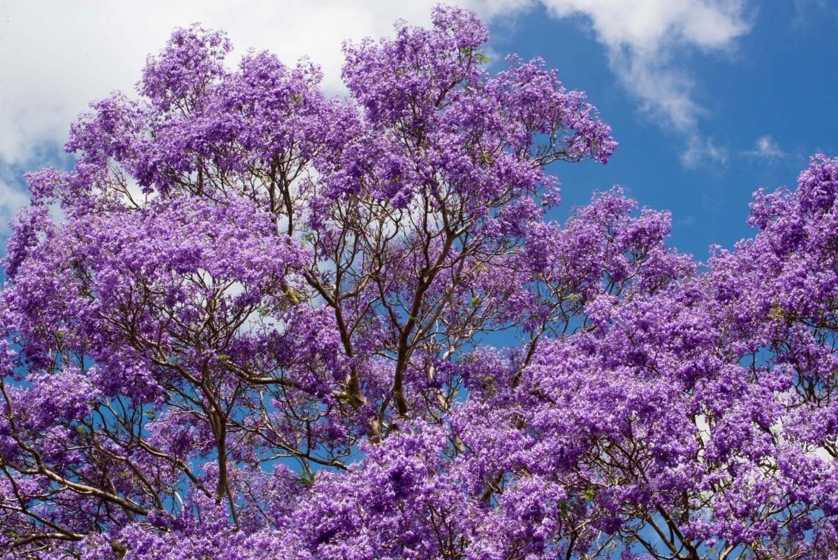 Значение цветущих деревьев в популярных сонниках.