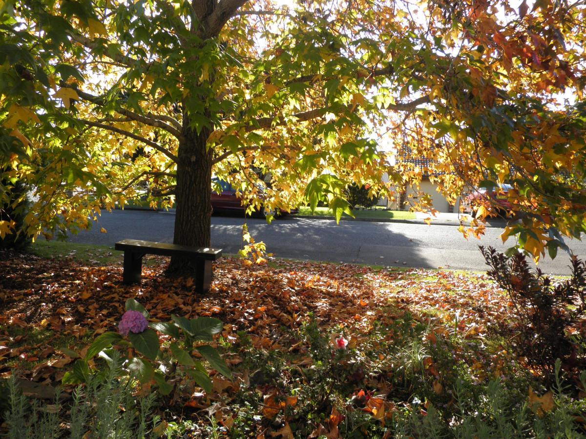 Картинка осень во дворе