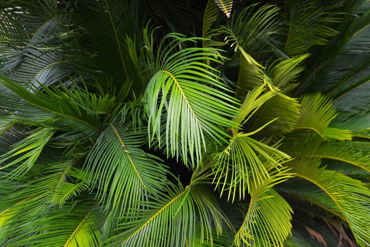 тропической части фотографии папоротников пальм закрытия