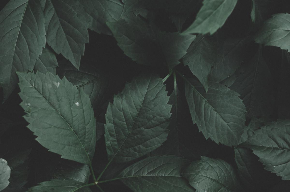 รูปภาพ พื้นหลัง ใกล้ชิด Dark Green Plants สิ่งแวดล้อม