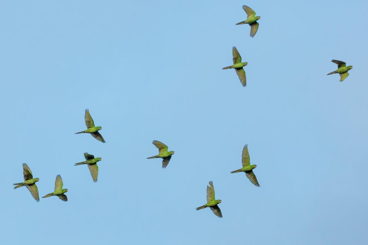 Free Images : nature, wing, sky, flower, flock, flying ...   1200 x 799 jpeg 47kB
