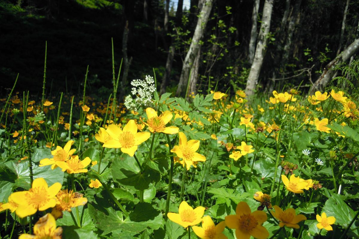 kostenlose foto wasser natur bl 252 hen blatt blume botanik gelb garten wasserpflanze