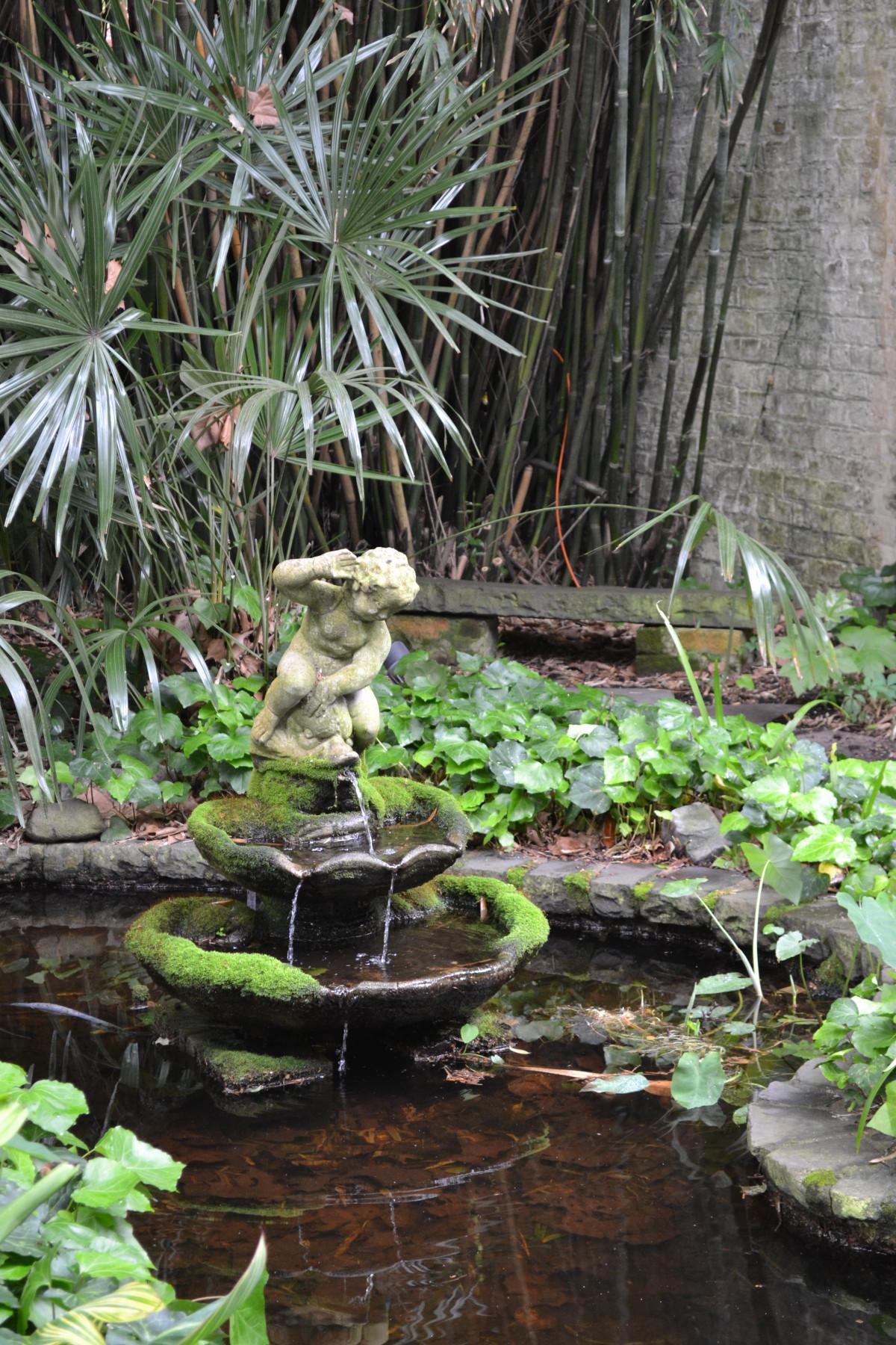 Tree, Plant, Flower, Old, Pond, Stream