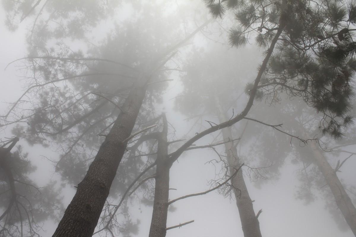 pochoir arbre