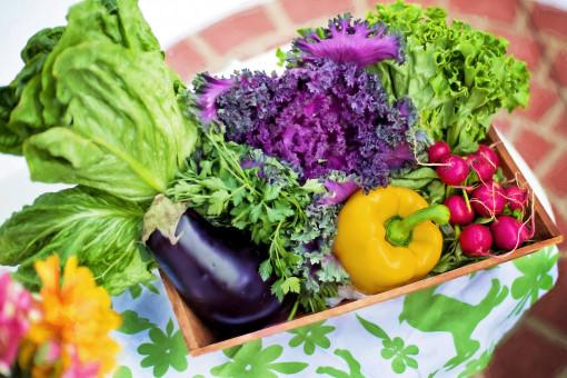 summer,dish,meal,food,salad,green