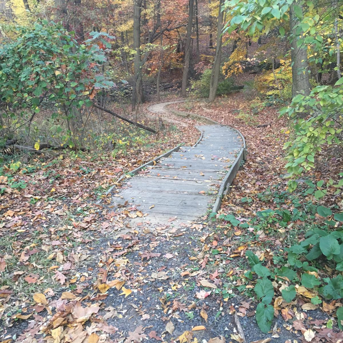 tree path track leaves - photo #42