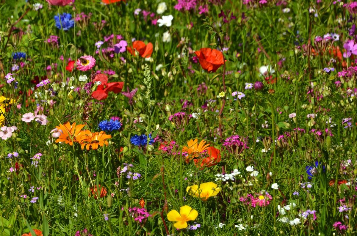Фото цветов которые растут летом