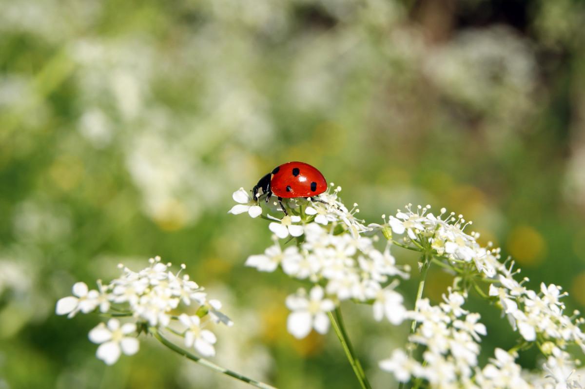 Фото с цветами и насекомыми
