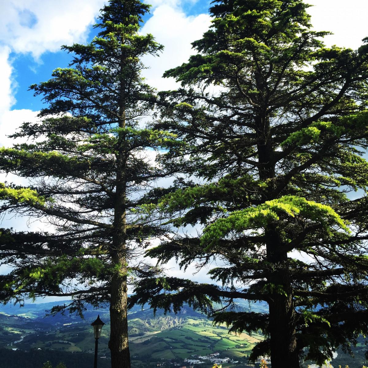 images gratuites paysage arbre la nature branche plante pin printemps vert italie. Black Bedroom Furniture Sets. Home Design Ideas
