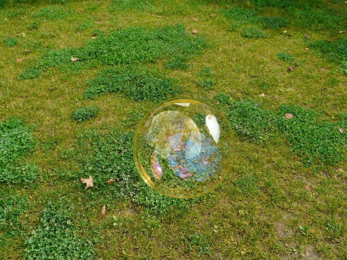 Immagini belle erba prato luce del sole foglia for Trasforma un semplice terreno in un colorato giardino