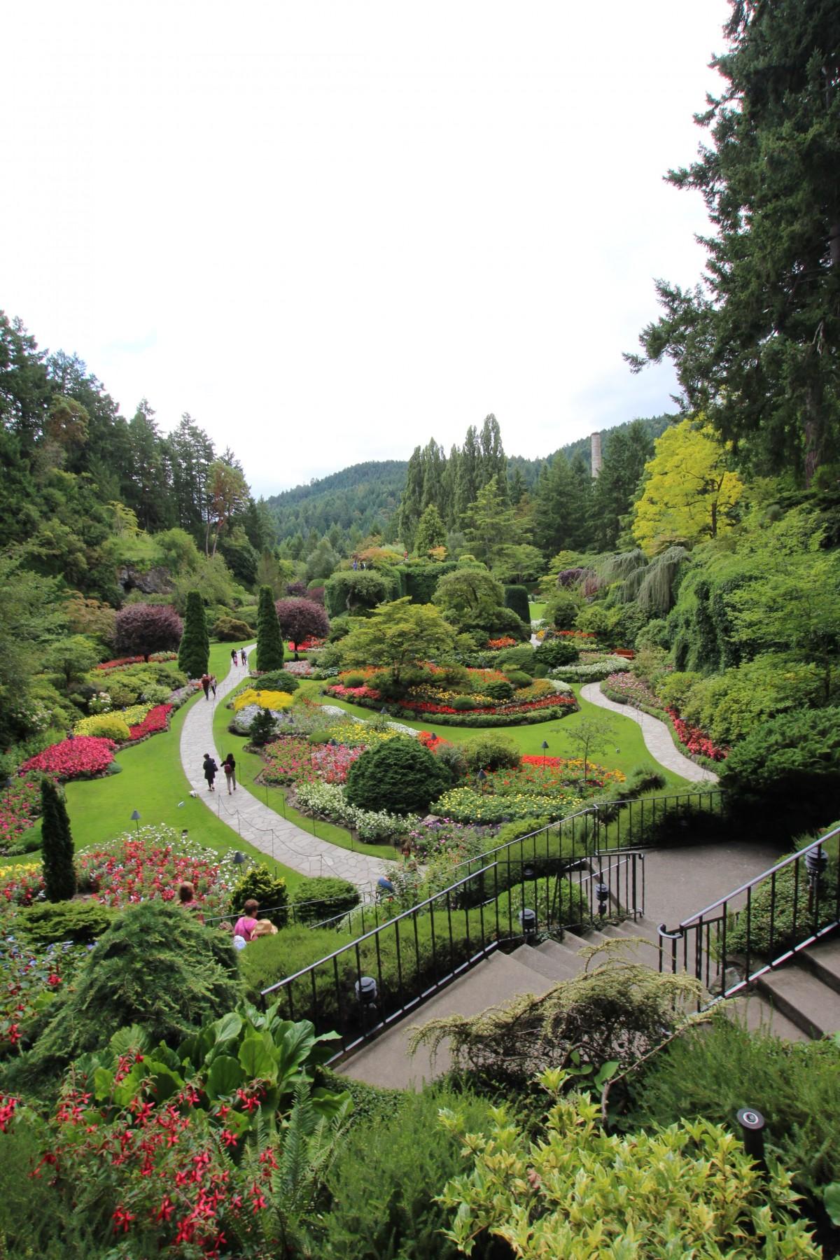 Vancouver Island Canada Plant Flora