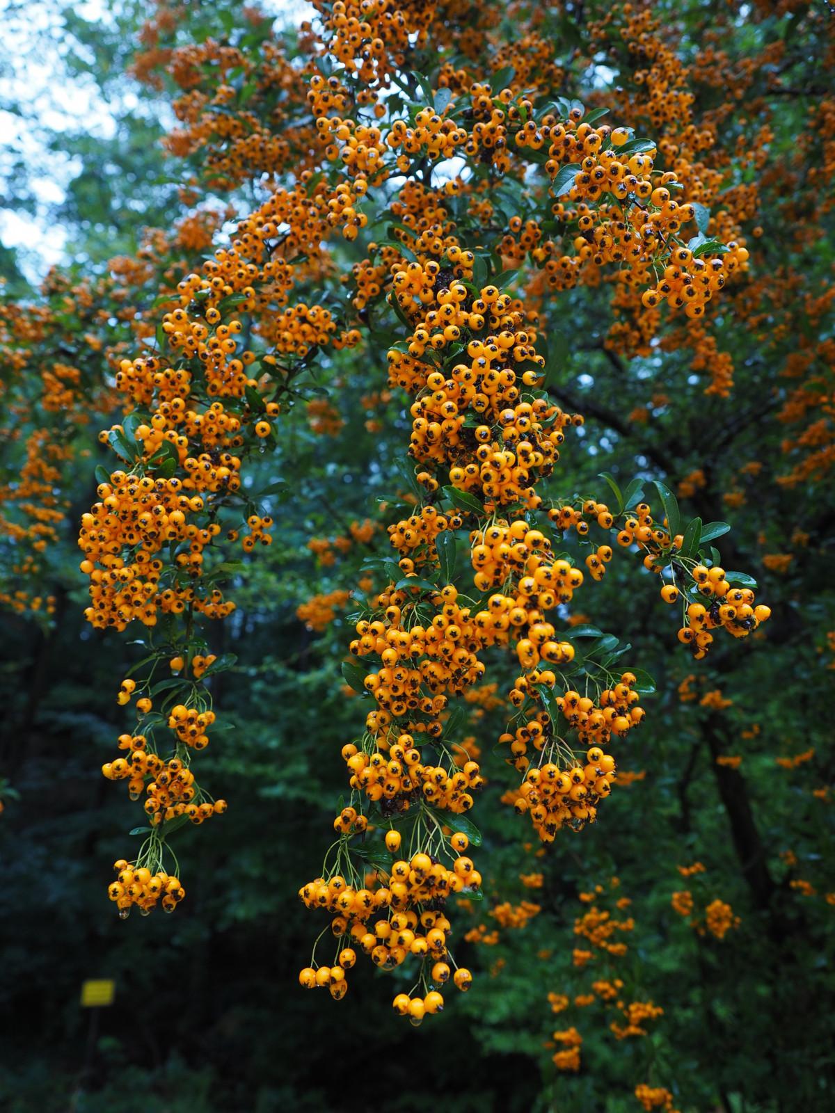Porno buisson d'orange gratuit