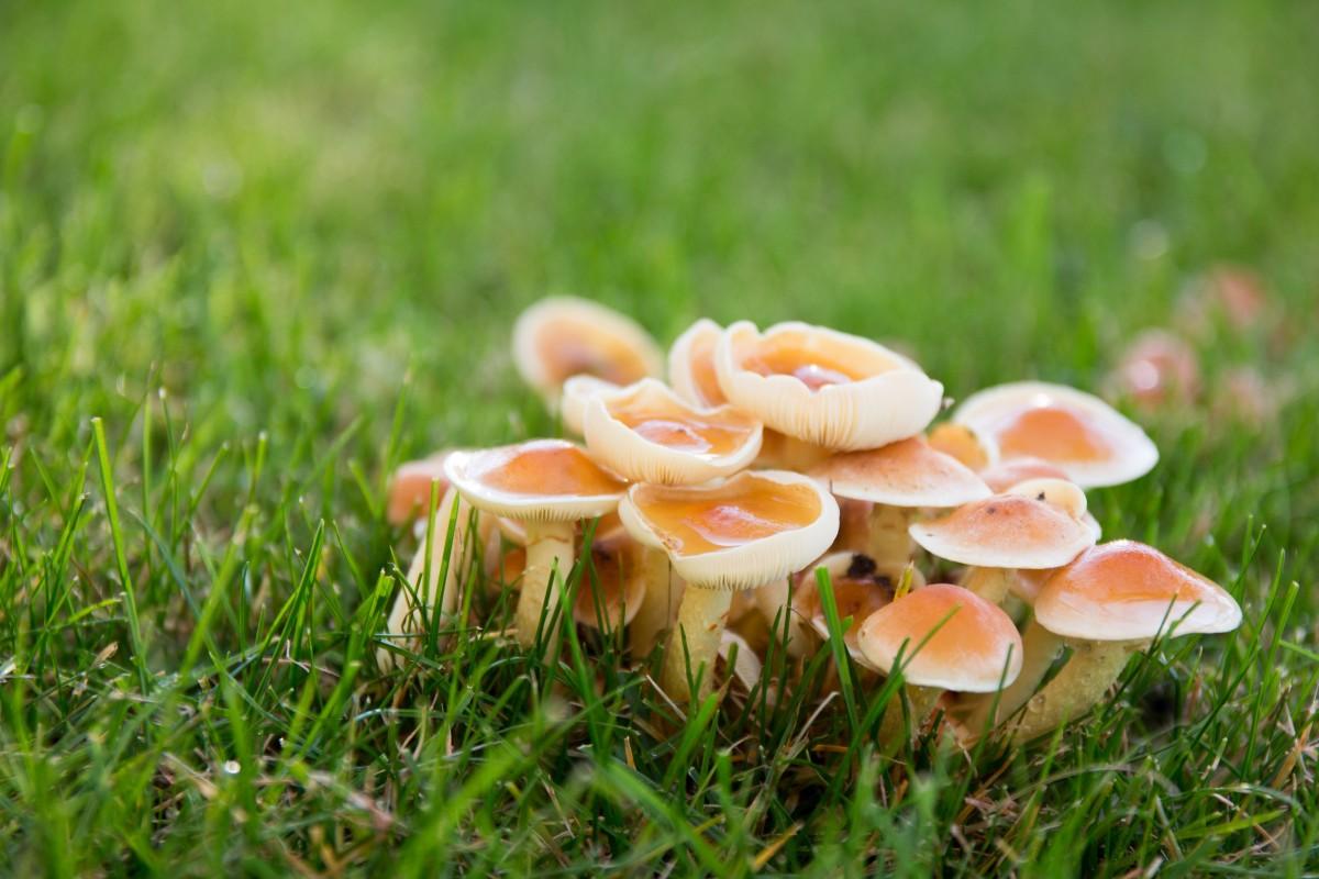 Reproduksi Jamur (Fungi) Secara Aseksual Dan Seksual
