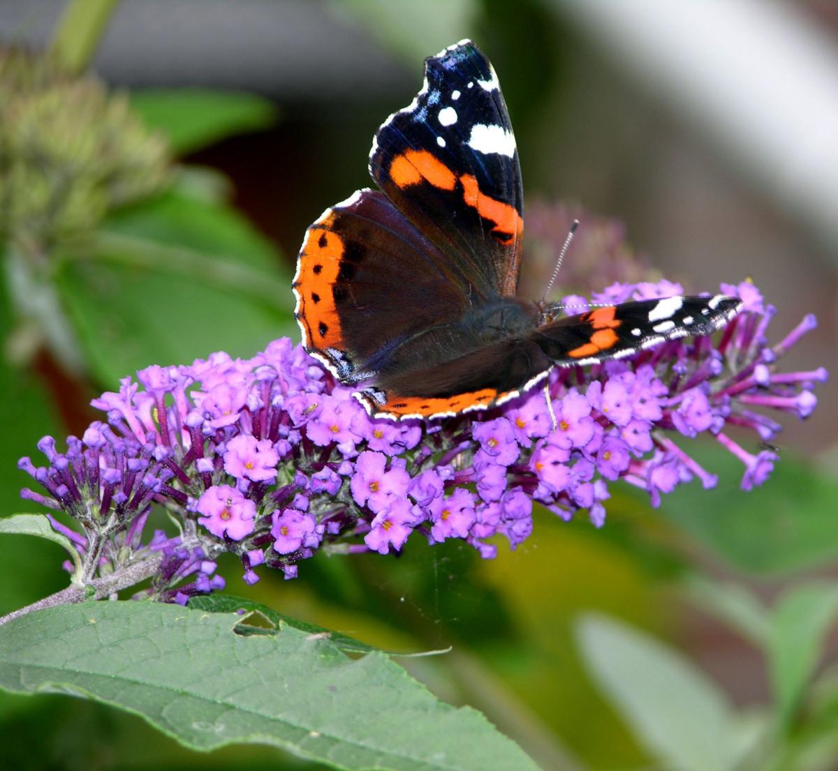 Бабочек поиск картинки