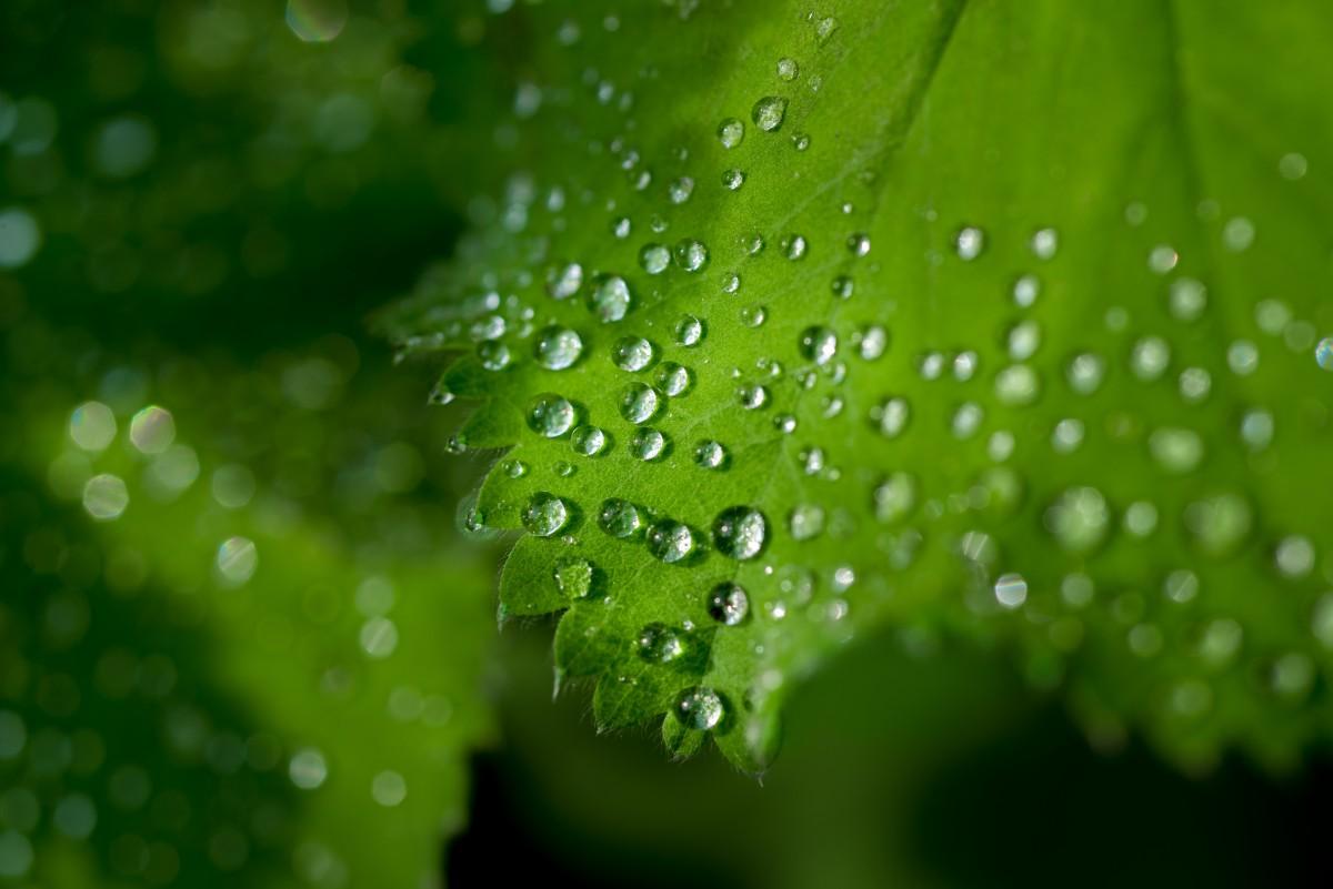 Images gratuites la nature herbe branche laissez for Nettoyer feuilles plantes