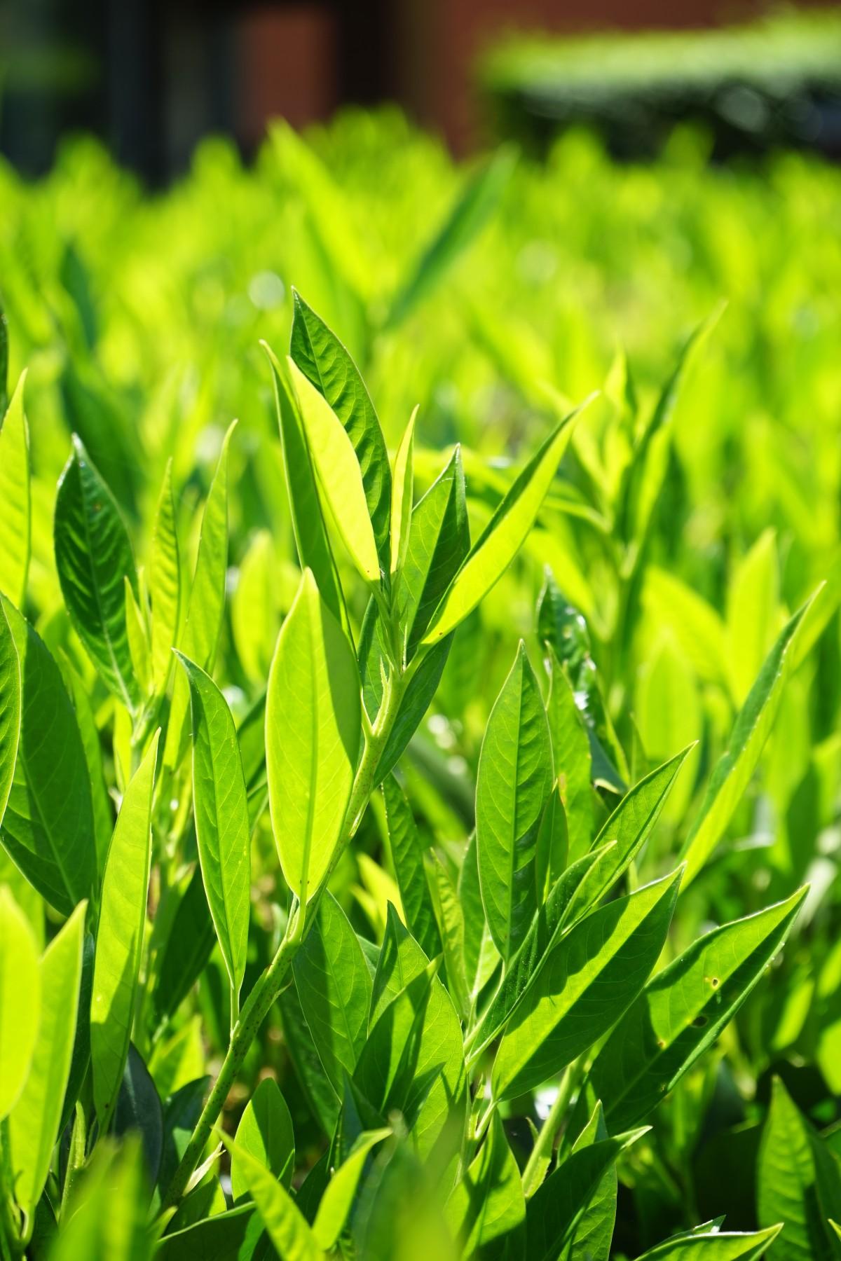 images gratuites arbre feuille fleur buisson vert