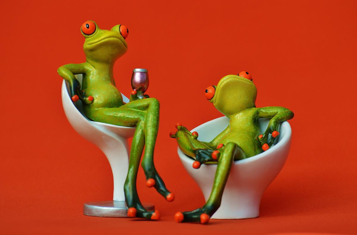 Родителям годовщину, картинки приколы с лягушками