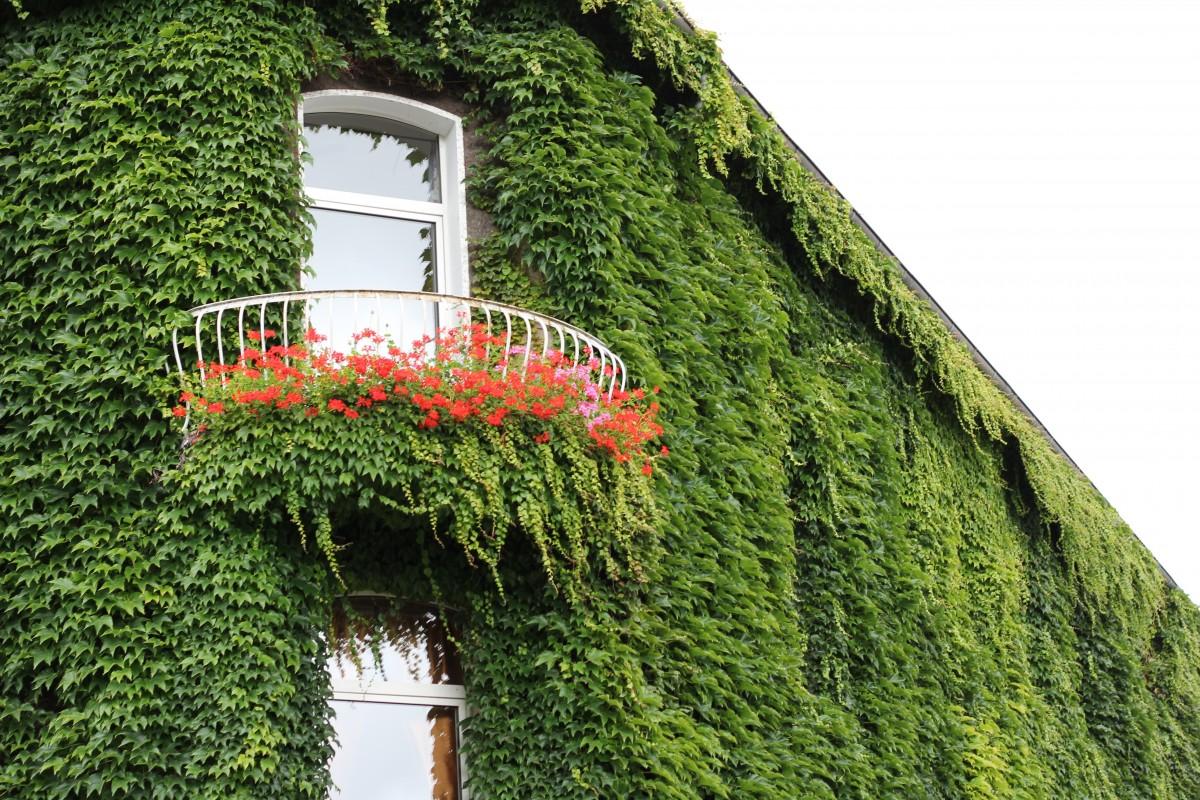 Piante Balcone Pieno Sole : Free images tree grass architecture plant lawn