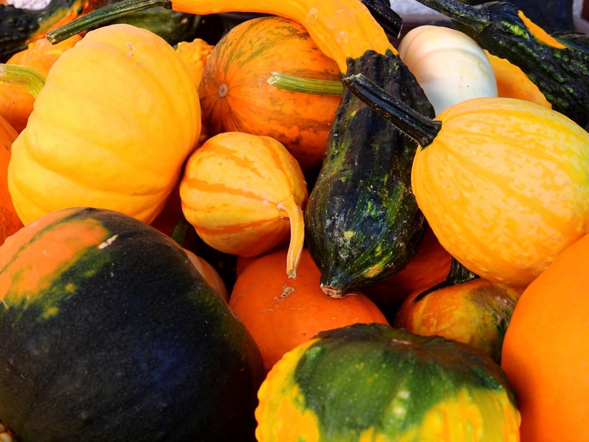 Gratis afbeeldingen fruit oogst produceren groente pompoen kalebas groenten calabaza - Deco fabriek ...