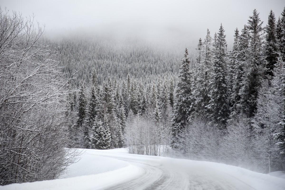 Kostenlose foto : Landschaft, Baum, Natur, Wald, draussen, Winter ...