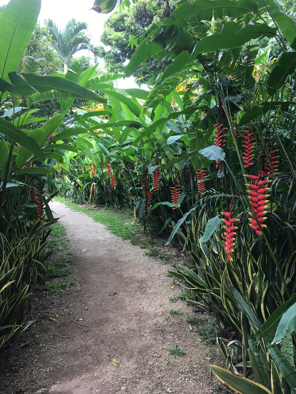 Baum Pflanze Blume Dschungel Botanik Garten
