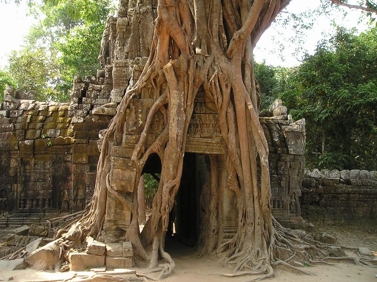 aztec world tree