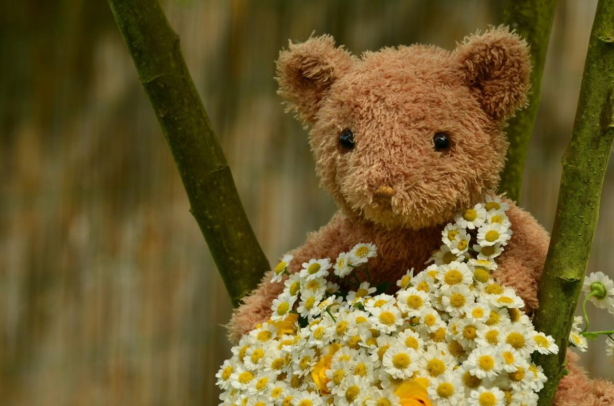 Медвежонок цветок