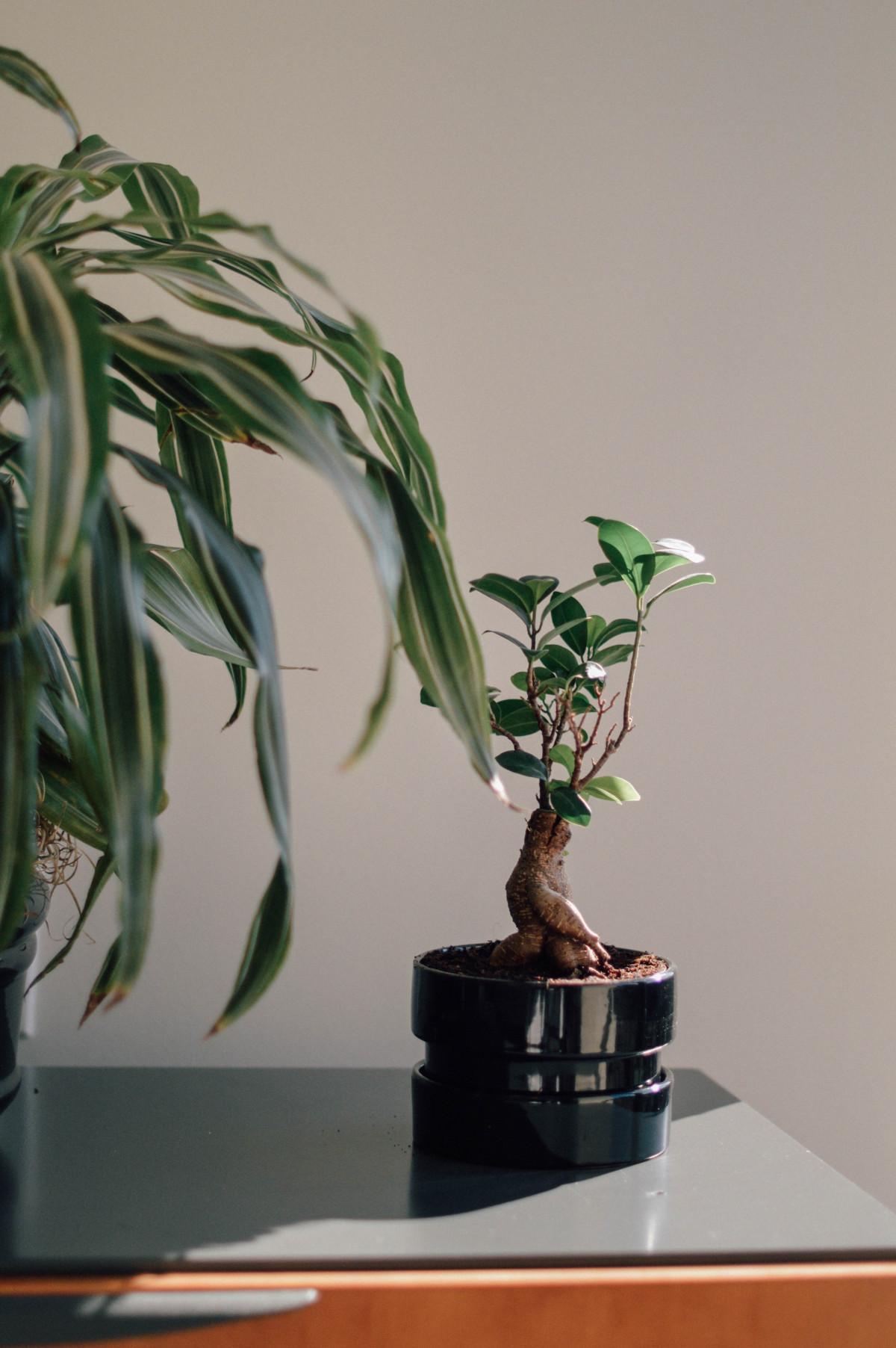 images gratuites produire plante en pot plante d 39 appartement pot de fleur bambou. Black Bedroom Furniture Sets. Home Design Ideas