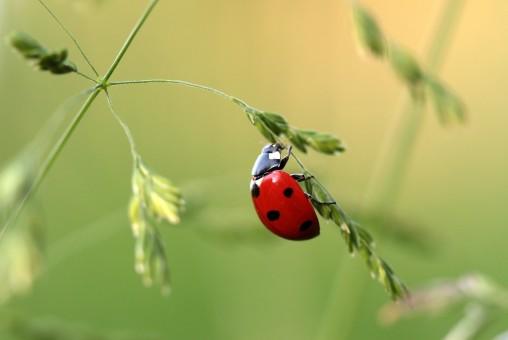 naturaleza,fotografía,flor,rojo,verde,insecto