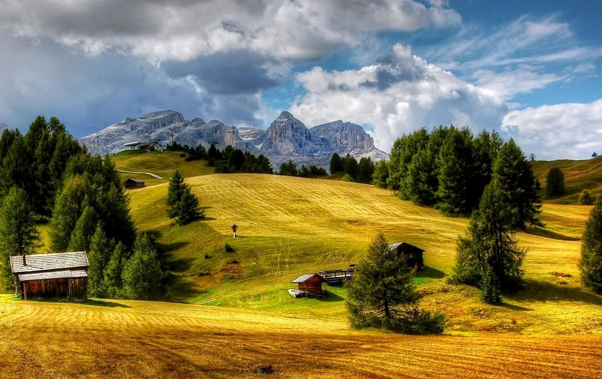 Immagini belle albero erba natura selvaggia nube for Immagini natura gratis