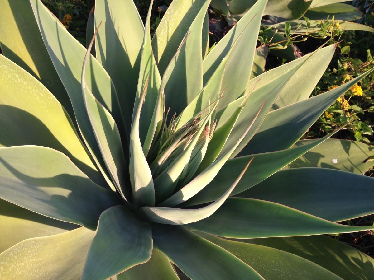 kostenlose foto natur kaktus w ste blume gr n. Black Bedroom Furniture Sets. Home Design Ideas