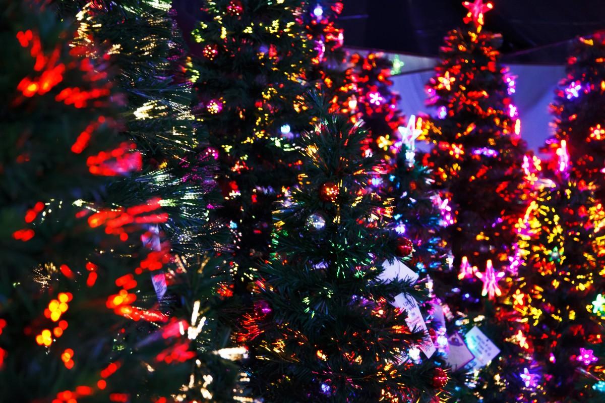 tree branch winter abstract petal celebration - Celebration Christmas Lights
