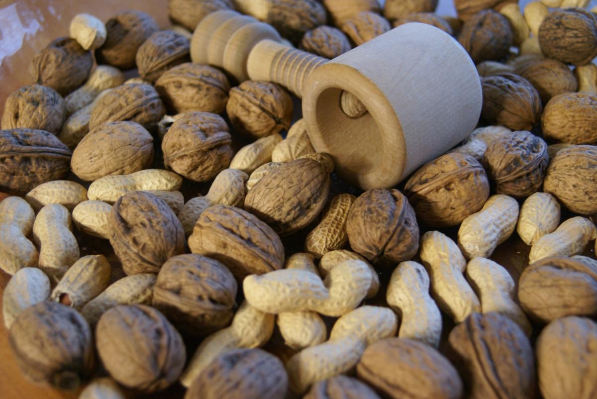 plante aliments produire marché écrou en bonne santé délicieux coquille cacahuète grignoter casse Noisette plante à fleurs noisetier Plante terrestre Graines de noix