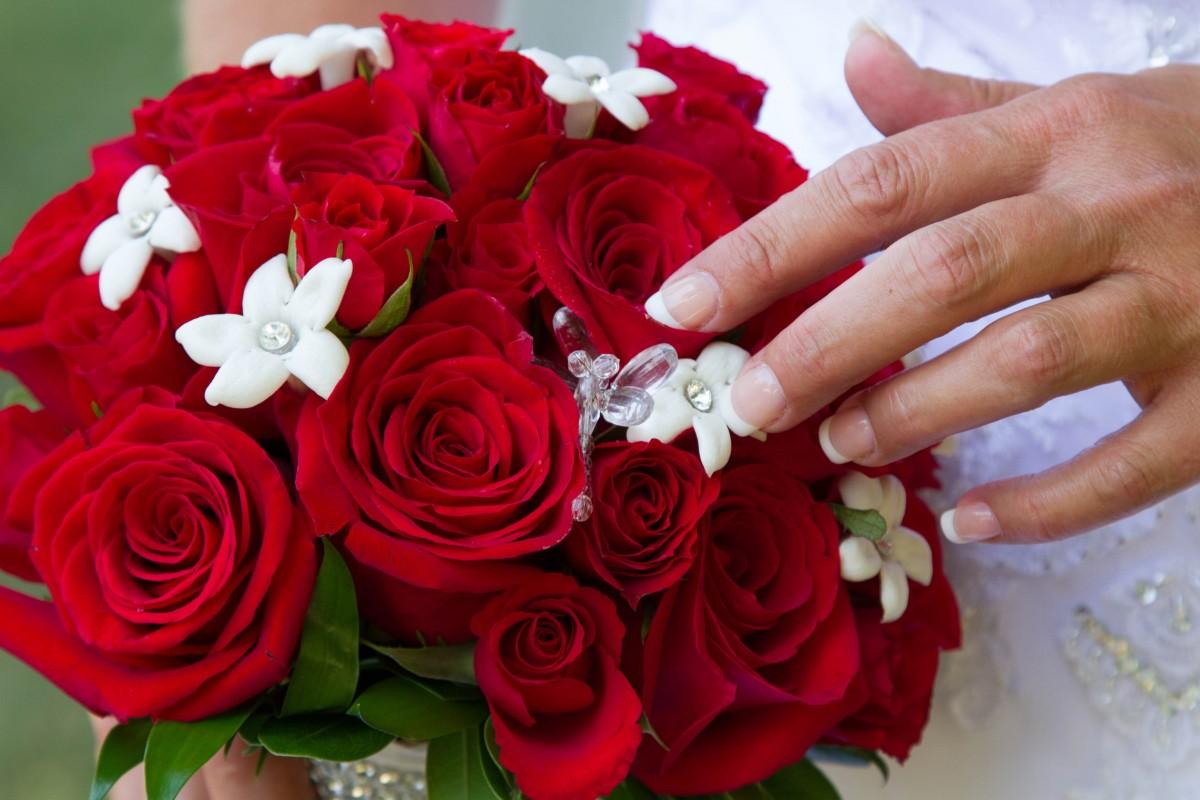images gratuites fleur p tale rouge rose mariage la. Black Bedroom Furniture Sets. Home Design Ideas