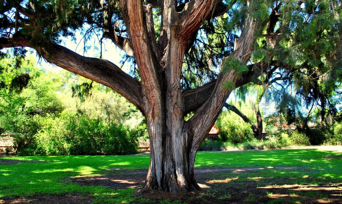 Images gratuites arbre la nature for t la personne - Arbres a feuilles caduques ...