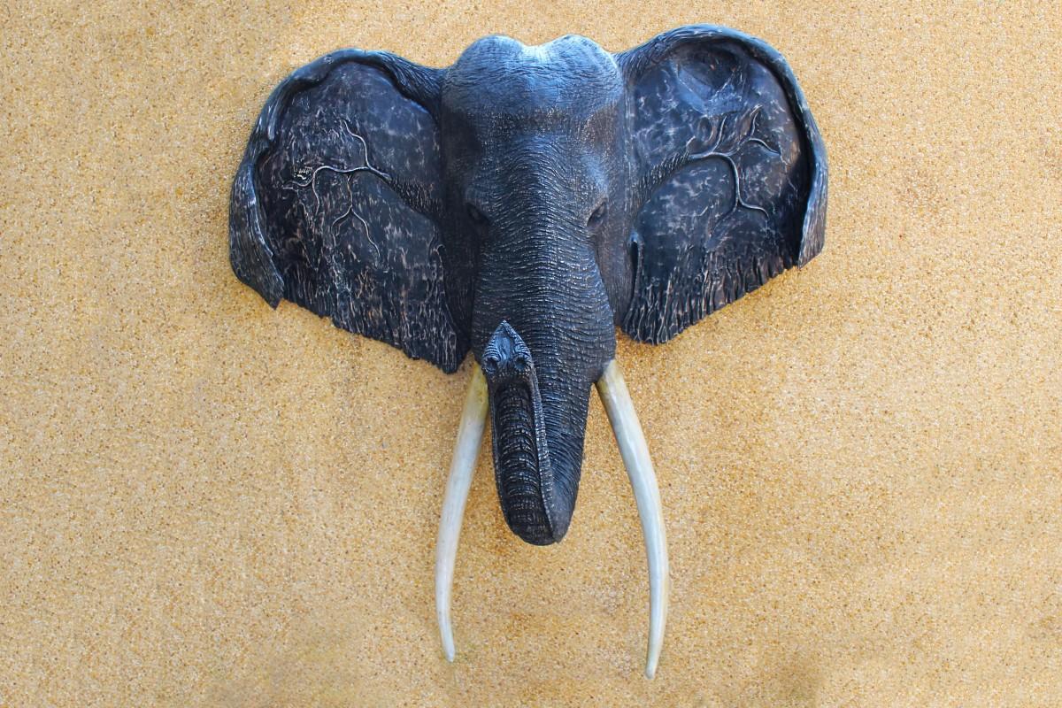 Images gratuites aile tronc animal corne d coration collection insecte bleu l phant - Photos d elephants gratuites ...