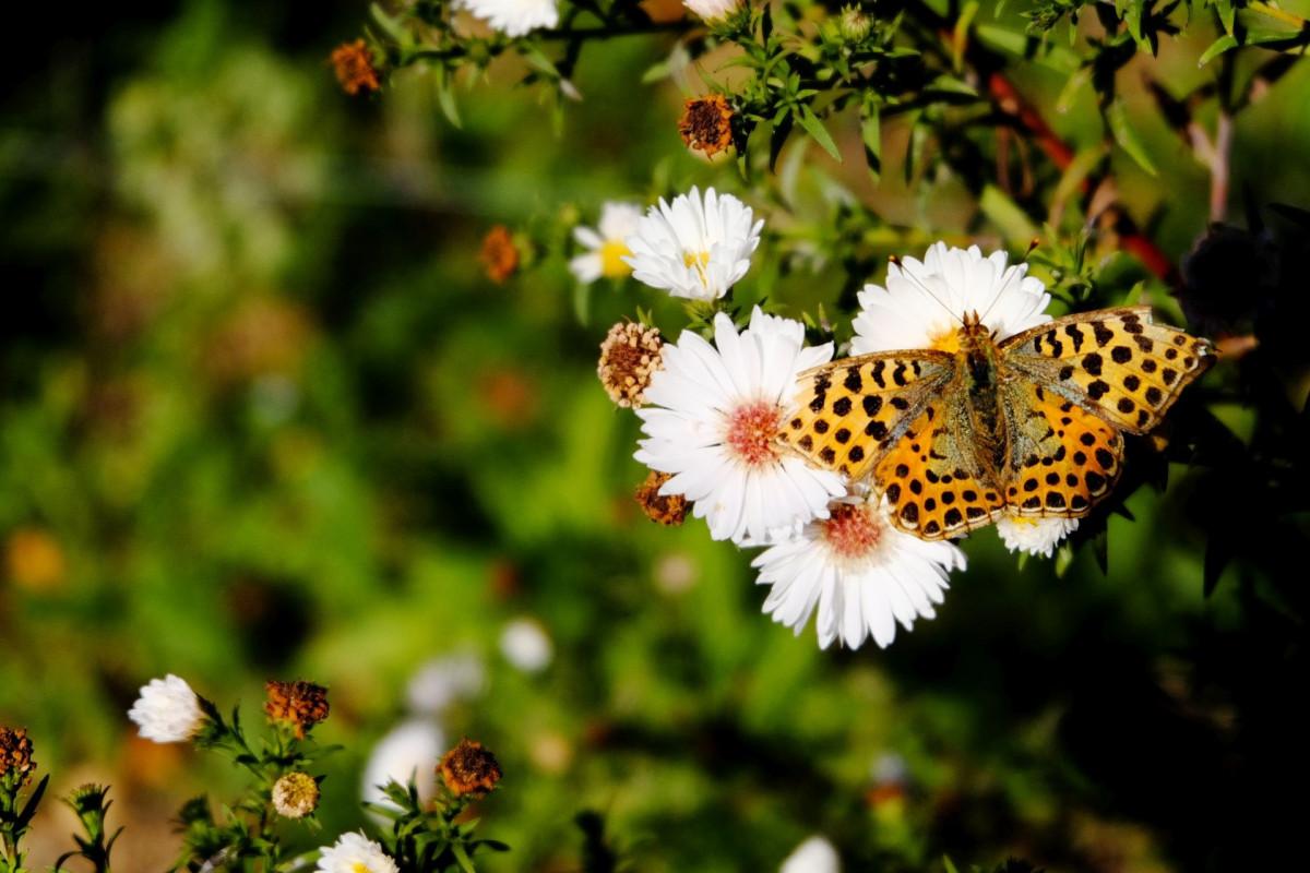 Картинка книг, картинка с полевыми цветами и бабочками