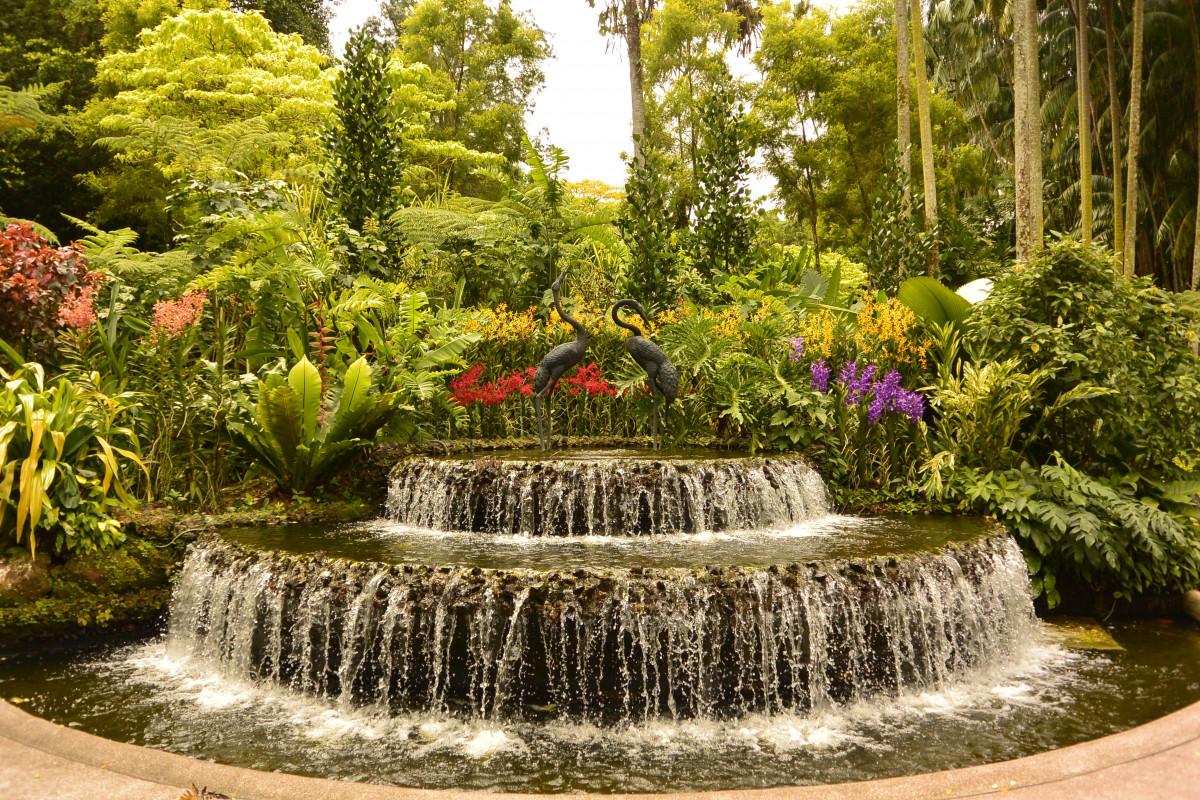 Images gratuites arbre fleur tang piscine parc for Au jardin les amis singapore botanic gardens