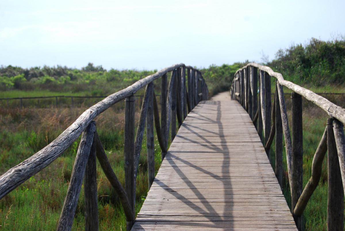 Fotos Gratis : Madera, Pasarela, Puente Colgante, Parque