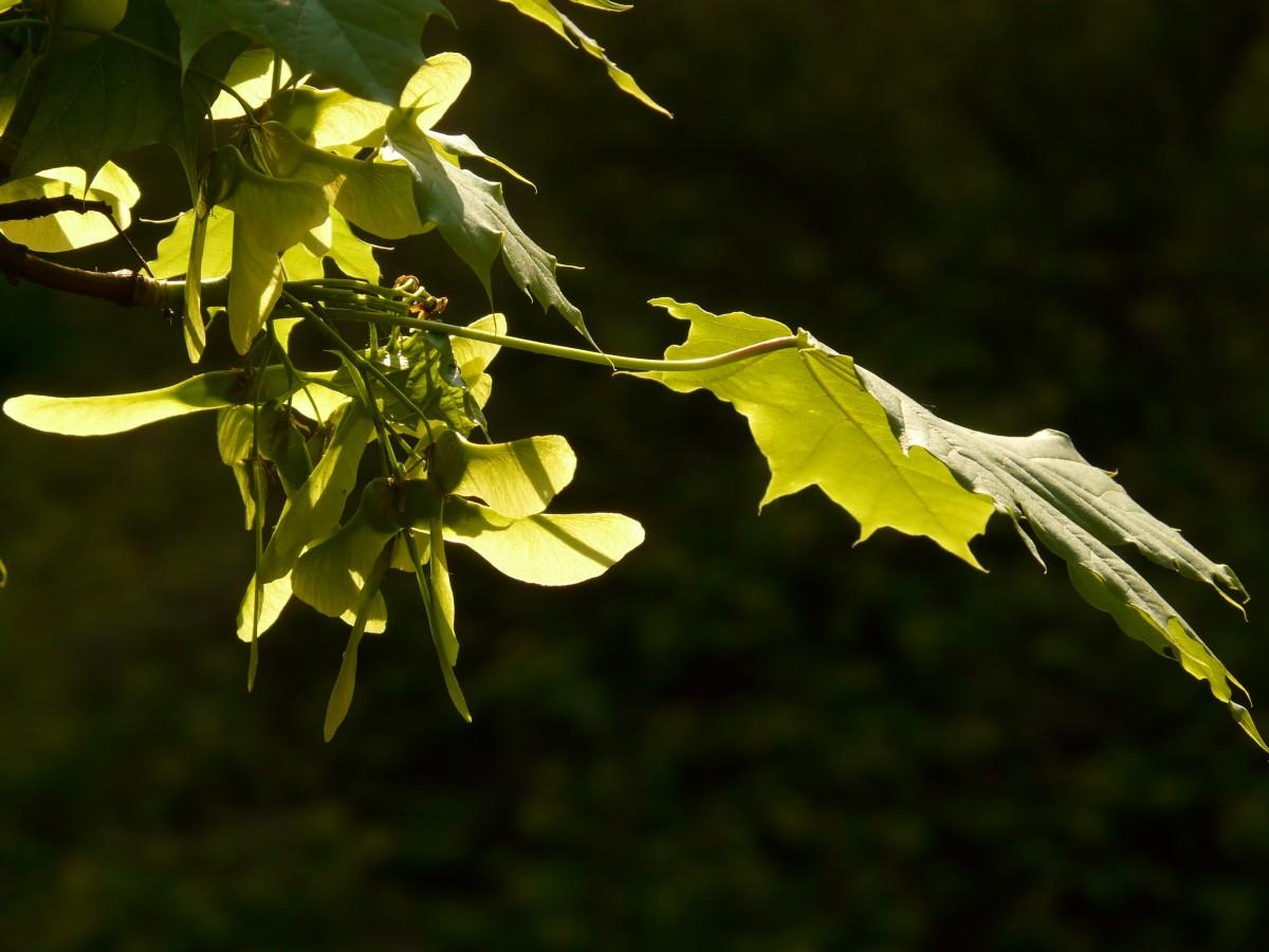 kostenlose foto baum natur ast bl hen himmel sonnenlicht blatt blume gr n herbst. Black Bedroom Furniture Sets. Home Design Ideas